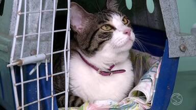 Saiba como prevenir e tratar doenças renais nos gatos - Março é o mês dedicado ao cuidado e prevenção de doenças renais.