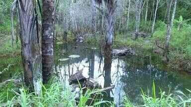 Nascente transformada em 'piscina particular' é recuperada no distrito de Taquaruçu - Nascente transformada em 'piscina particular' é recuperada no distrito de Taquaruçu