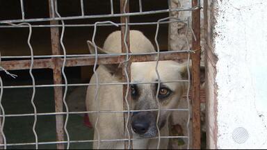 Abandono de cães e gatos triplicam em Salvador - A Associação Protetora de Animais realiza feira de adoção. Confira.