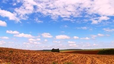 Fazenda com vocação para produzir sementes auxilia produtores - Altair Müller planta milho em 100 hectares e cerca de 30% do que colhe vai para a produção de sementes. Ele trabalha dentro de um sistema de parceria, em que compra milho da Fazenda Ataliba Leonel, em Manduri (SP), e entrega sementes. Uma das vantagens, segundo o produtor, é o custo menor.