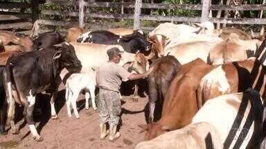 Produtores que vão participar de festas agropecuárias poderão antecipar vacina do gadoo - Produtores que vão participar de festas agropecuárias poderão antecipar vacina do gado