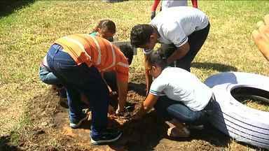 Projeto desperta em estudantes de escola em Bacabal cuidado com o meio ambiente - Projeto é desenvolvido por meio de palestras e também do plantio de mudas de bacaba, a palmeira que deu origem ao nome de Bacabal.