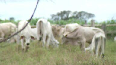 Saiba mais sobra a raiva, doença que pode matar bovinos e trazer prejuízos ao produtor - Saiba mais sobra a raiva, doença que pode matar bovinos e trazer prejuízos ao produtor
