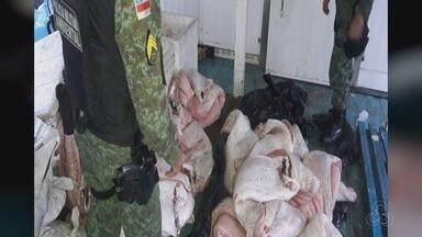 Polícia apreende barco com 1,5 t de pescado e drogas no AM - Produto irregular foi encaminhado foi descoberto pela PM.