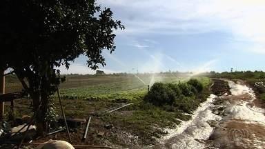 Delegacia do Meio Ambiente fiscaliza problemas ambientais em fazendas de Goiás - Entre irregularidades estão nascentes degradadas e hortaliças sendo plantadas com uso de agrotóxico em áreas de preservação ambiental.
