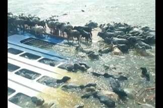 MP denuncia 5 pessoas, 4 empresas e a Companhia Docas do Pará por naufrágio de bois - O acidente com a embarcação despejou toneladas combustíveis no rio, matou milhares de bois e prejudicou a vida de centenas de moradores ribeirinhos em Barcarena.