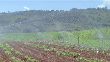 Agrônoma explica como fazer plantação irrigada de batata-doce - A agrônoma da Embrapa Larissa Vendrame responde à pergunta do Rony de Figueredo, de Fortaleza, no Ceará.
