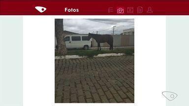 Cavalo solto em Linhares é flagrado andando em canteiro - O dono do animal será multado.