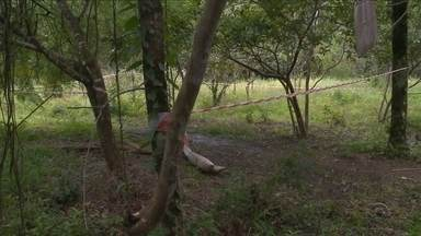 Corpo encontrado decapitado em terreno de Blumenau é identificado pela polícia - Corpo encontrado decapitado em terreno de Blumenau é identificado