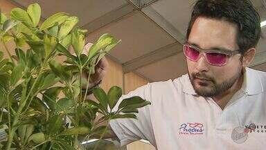 Agrishow apresenta óculos especiais para identificar praga que acaba com laranjais - Maior feira de agronegócio da América Latina traz novidades em tecnologia para o campo.