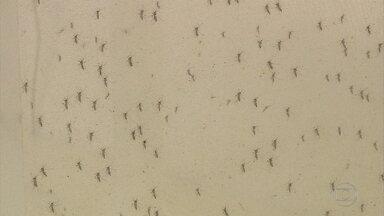 Campanhas de combate ao Aedes aegypti são reforçadas em Belo Horizonte - Pesquisadores alertam que este período de temperaturas mais baixas é o momento certo de eliminar os criadouros do mosquito.