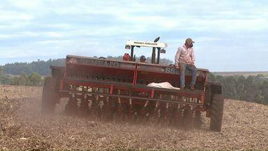 Área plantada com trigo no Paraná vai ser menor este ano - Produtores estão desanimados com o preço do produto.