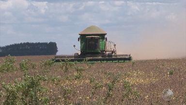 Mais de cinco milhões de toneladas de soja foram colhidas este ano no oeste do estado - Sessenta por cento dessa soja foi exportada para países como China, Japão, Alemanha e Estados Unidos.