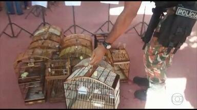 Cipoma apreende pássaros silvestres e leva 70 pessoas para a delegacia, em Jaboatão - Todos os suspeitos participavam de evento, na manhã desta quarta-feira (16).