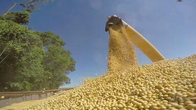 Produtores armazenam soja na esperança de uma melhora no preço do grão - Mais de 19 milhões de toneladas de soja foram colhidas no Paraná.
