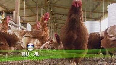 Globo Rural - Edição de 21/05/2017 - Economia de água na irrigação beneficia produtores de hortaliças em GO. Fenômeno raro faz mula parir um lindo burrinho. Mancha Branca já dizimou viveiros de camarão do Ceará e do RN.