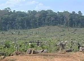 Aquecimento global pode mudar estrutura da floresta - Informação faz parte de pesquisa sobre clima.