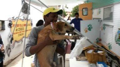 Grupos de proteção a animais reclamam da suspensão do serviço do VetMóvel - Serviço atendia a animais nas ruas de Fortaleza.