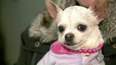Cães e gatos de raça resgatados em um canil recebem tratamento - Depois os bichos devem ficar disponíveis para adoção