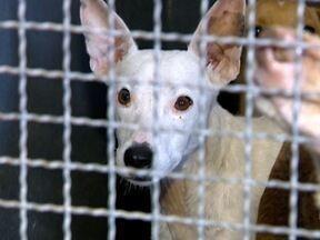 Prefeitura de Prudente encerra recolhimento de animais com leishmaniose - Nesta quarta-feira (31), mais 10 casos foram confirmados.