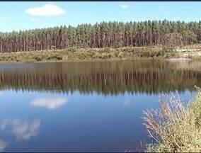 Órgãos ambientais fazem visita em plantação de eucaliptos próximo da Barragem de Juramento - Barragem de Juramento é a principal fonte de abastecimento em Montes Claros.