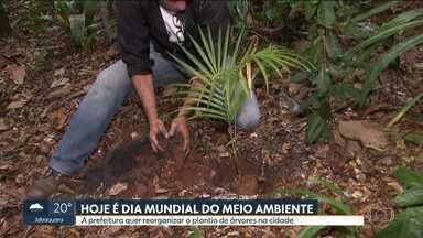 Prefeitura quer reorganizar plantio de árvores na cidade - Administração municipal e o Instituto Mata Atlântica assinaram um compromisso para marcar o Dia Mundial do Meio Ambiente, comemorado nesta segunda (5).
