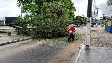 Árvore cai no bairro do Poço - Ela ficou interditando parte da pista.