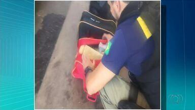 Duas mulheres são presas com 50 kg de maconha em ônibus interestadual - Duas mulheres são presas com 50 kg de maconha em ônibus interestadual