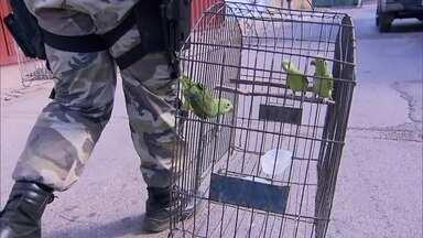 Operação encontra 15 criadouros clandestinos de pássaros - Operação aconteceu com o Ibama em conjunto com a Polícia Ambiental e o Ibram.