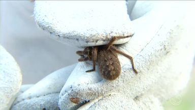 INB, em Resende, está ajudando a produzir soro contra picada de aranha armadeira - Espaço foi criado para atrair esses animais peçonhentos.