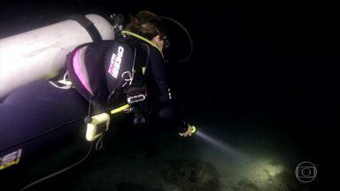 Mergulho noturno na Ilha Grande revela a magia das águas que brilham - A equipe também subiu, no meio da escuridão, o Pico do Papagaio, o segundo ponto mais alto da Ilha Grande, para contemplar o amanhecer.