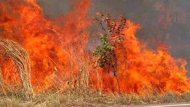 Governo estadual decreta risco de desastre ambiental por causa de queimadas em 7 cidades - Governo estadual decreta risco de desastre ambiental por causa de queimadas em 7 cidades