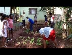 Escola de Governador Valadares ensina crianças na prática sobre plantio e colheita - Hortas e mudas são cuidadas diariamente pelos alunos.