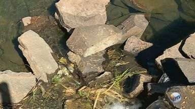 Após morte de peixes, moradores criticam sujeira em parques de Ribeirão Preto - Usuários dizem que lixo não está sendo recolhido nos espaços de lazer.