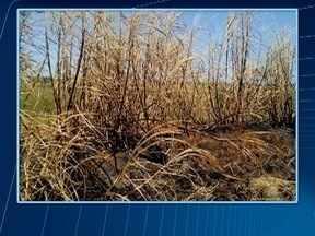 Usina é multada em mais de R$ 11 mil por queimada irregular - Ação foi em área de cana-de-açúcar, em Mirante do Paranapanema.