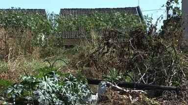 Comunidade reclama do mato alto nas setores Vila Rosa e Center Ville, em Goiânia - Uma moradora teve até que desligar a cerca elétrica por causa do matagal.