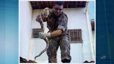 Cobra 'invade' casa no Ceará e assusta moradores - Cobra 'invade' casa no Ceará e assusta moradores
