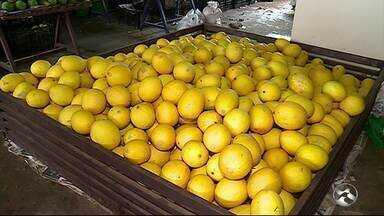 Chuvas baixam preço de frutas e verduras em Caruaru - Expectativa é de preços mais baixos na Ceaca.