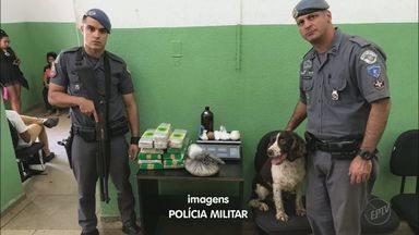 Cão da PM leva a apreensão de 15 quilos de maconha em Ribeirão Preto - Droga estava enterrada em área do bairro Jardim Salgado Filho, na zona norte.