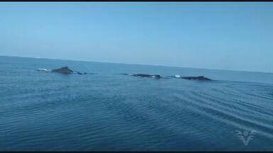 Baleias são flagradas na Barra de Santos - Vídeo foi registrado por um marinheiro.