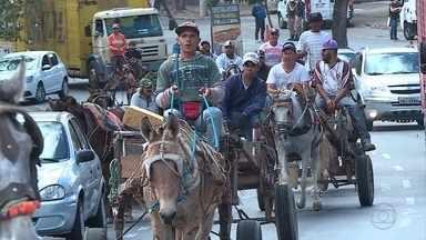Carroceiros protestam contra projeto que prevê a retirada deles das ruas de Belo Horizonte - O texto prevê a substituição de cavalos por por motocicletas acopladas a uma caçamba. Ele está em tramitação na Câmara Municipal.
