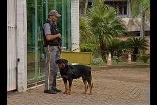 No quadro 'Meu Condomínio', BDP fala sobre segurança com cães adestrados - Especialista explica como funciona o sistema de segurança com cães.
