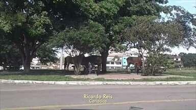 Quatro cavalos são flagrados soltos em avenida de Cariacica, ES - Prefeitura disse que cidadão que avistar animais soltos pode entrar em contato com a Coordenação de Posturas pelo telefone 3354-5113.
