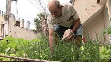 Hortas urbanas levam produção de alimentos para dentro de casa, em Vitória - Moradores da capital mostram plantações dentro de casas e apartamentos.