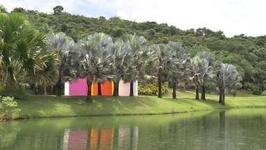 Coleção reúne inúmeras espécies de palmeira no Inhotim - No jardim botânico do instituto, existe até palmeira que anda.
