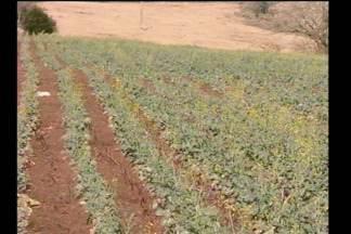 Tempo seco e calor prejudica lavouras na Região - Em São Luiz Gonzaga, RS, a produtividade foi afetada.