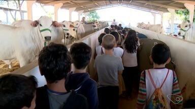 Expoagro Vidas tem espaço para crianças terem contato com animais, no Norte do ES - Evento começou nesta quinta-feira (3).