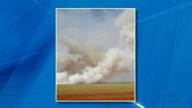 Incêndio consome grande área na BR-463, MS - O incêndio começou no início da tarde desta quinta-feira (10) na região do trevo da Laguna Carapã.