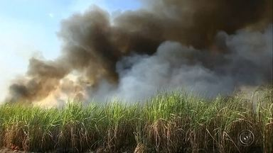 Depois de megaincêndio em Iacri, casos se espalham no Centro-Oeste Paulista - Um dia depois do grande incêndio que devastou 400 hectares na região de Iacri, Centro Oeste Paulista, que vive estiagem de quase dois meses, registrou novos casos em Marília, Bauru, Garça e Jaú.