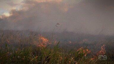 Entenda danos provocados pelo fogo à fauna e flora do Cerrado - Reportagem especial faz parte da série 'Cerrado em Chamas'.